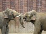 Elefantenstreit, Anja Kronberg, pixelio.de